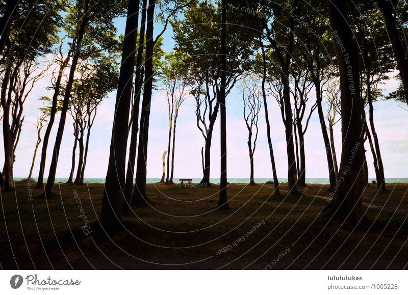 das ist im wald. Himmel Natur Ferien & Urlaub & Reisen Baum Erholung ruhig Wald Gras Freiheit Zufriedenheit Spaziergang Sehnsucht Bank atmen innehalten