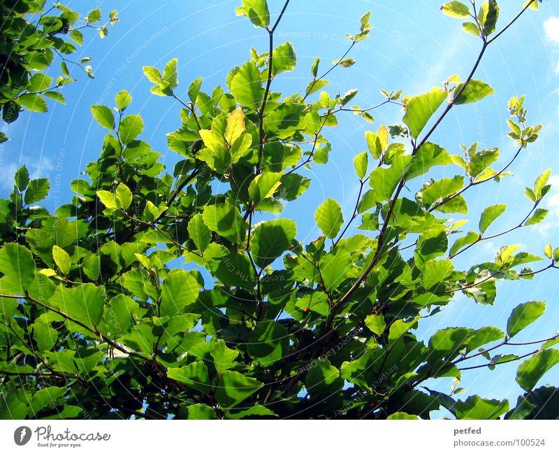 Im Garten Eden IV Natur Himmel Baum grün blau Sommer Freude Wolken gelb Frühling Wetter Ast Baumstamm Gott Götter