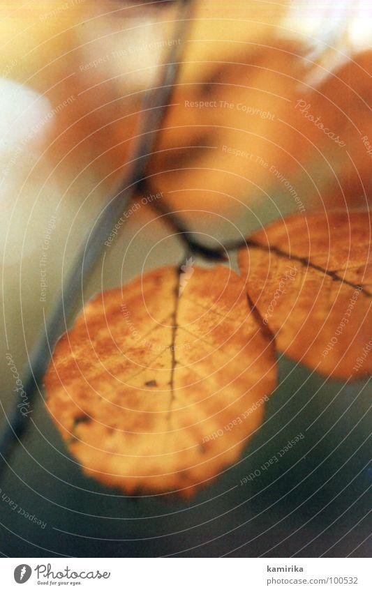 rotlaub Natur alt grün Baum rot Farbe Blatt Winter Tod Herbst Holz Stimmung Wachstum neu Ast fallen