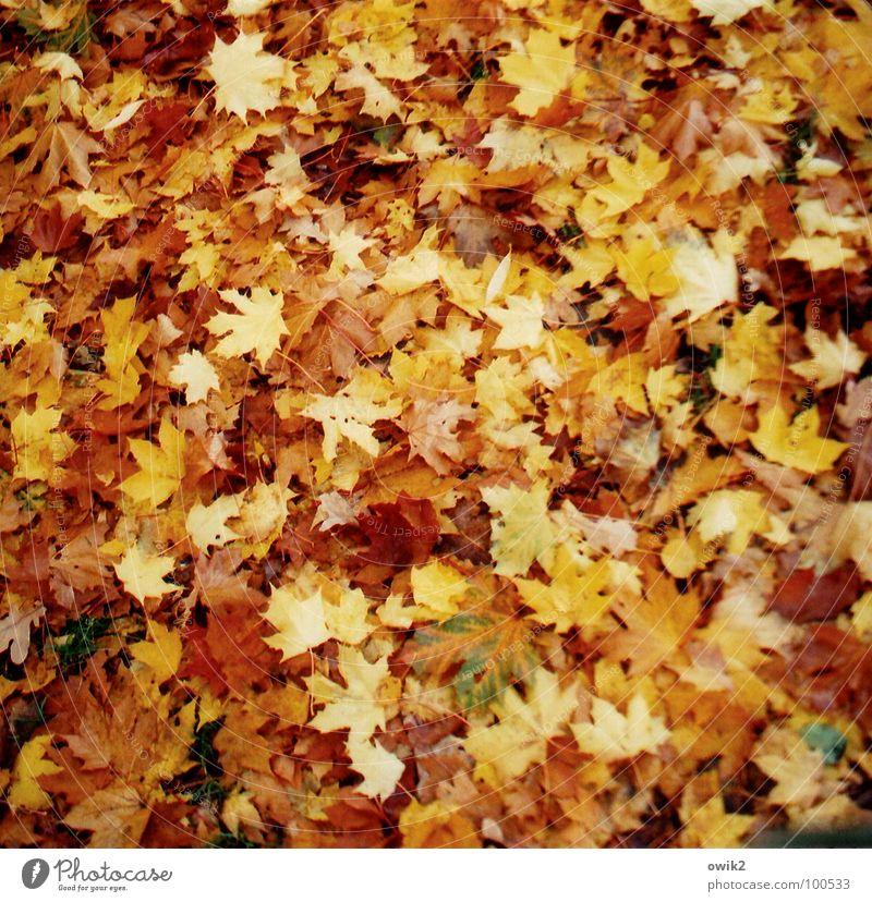 Herbst-Psalm Umwelt Natur Pflanze Urelemente Erde Klima Blatt Wiese Herbstlaub fallen genießen liegen verblüht dehydrieren Zusammensein Unendlichkeit mehrfarbig