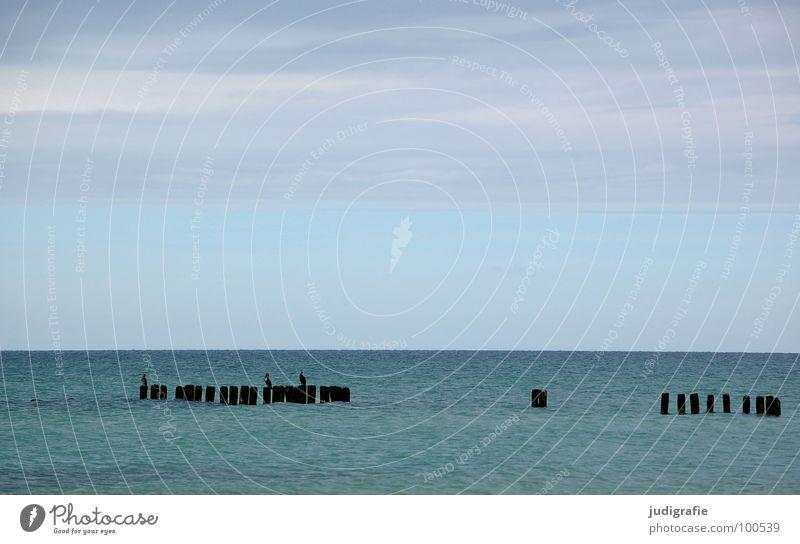 Meer Wasser schön Himmel grün blau Strand Ferien & Urlaub & Reisen ruhig Tier kalt Holz Linie 2 Küste nass