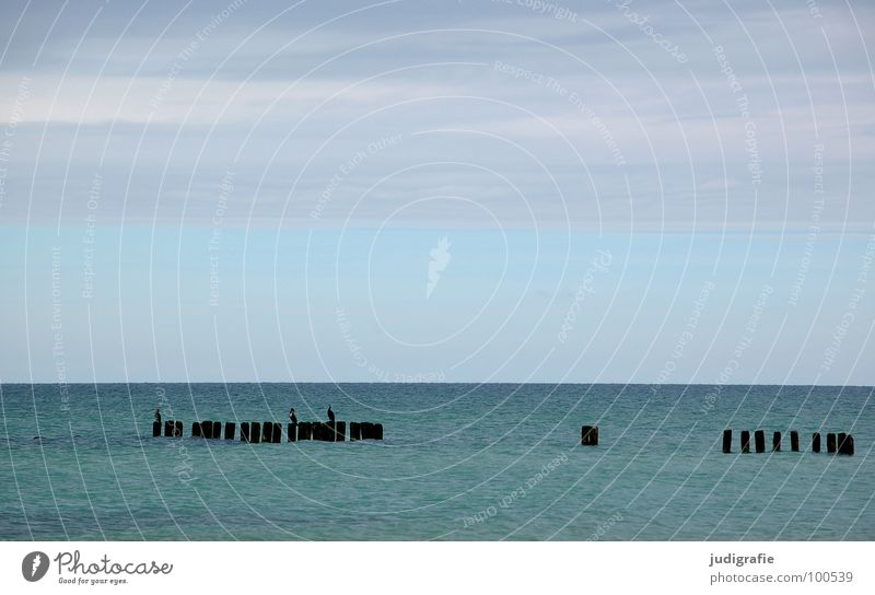 Meer Wasser schön Himmel Meer grün blau Strand Ferien & Urlaub & Reisen ruhig Tier kalt Holz Linie 2 Küste nass