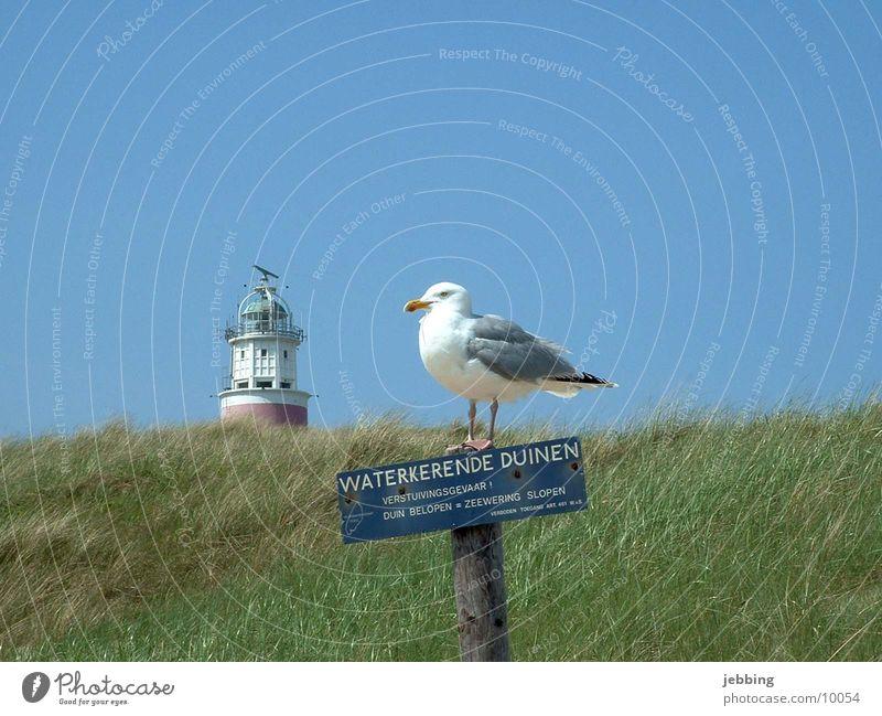 Idylle Meer See Möwe Vogel Leuchtturm Gras Möwenvögel Island Himmel Blauer Himmel seemöwe Nordsee Stranddüne landschaft. blauer himmel Schilder & Markierungen