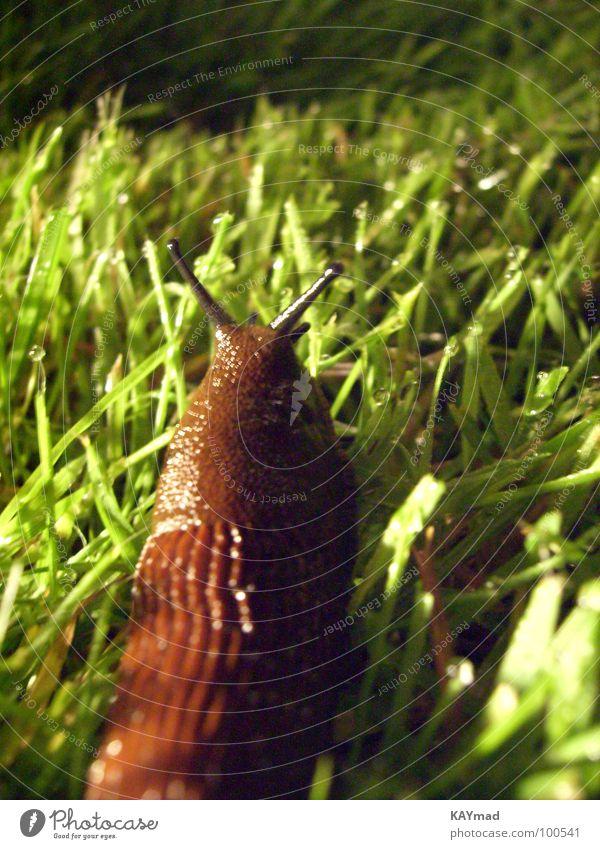 schleimig ruhig Einsamkeit Wiese Gras nass Ekel Schnecke schleimig