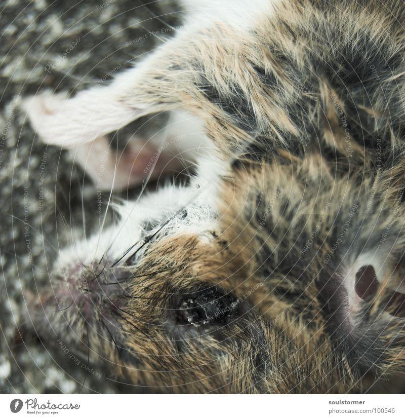 Katzenfutter - Noch eine... Pfote Schnauze Ameise Futter Leiche Fell bewegungslos Vergänglichkeit Friedhof nass Bäh igitt Ekel Tier klein niedlich Makroaufnahme