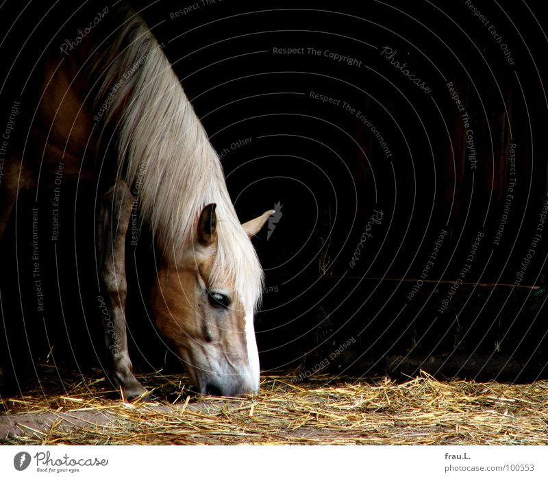 Pferd Tier Pferd Kitsch Bauernhof Appetit & Hunger Fressen Säugetier Maul Stroh Stall Mähne Wunschtraum Landleben Streu