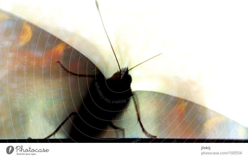 Zerschmetterling IV Schmetterling gemalt flattern mehrfarbig Fenster Fühler Gegenlicht Insekt schön elegant zart weich zerbrechlich lieblich weiß Freisteller