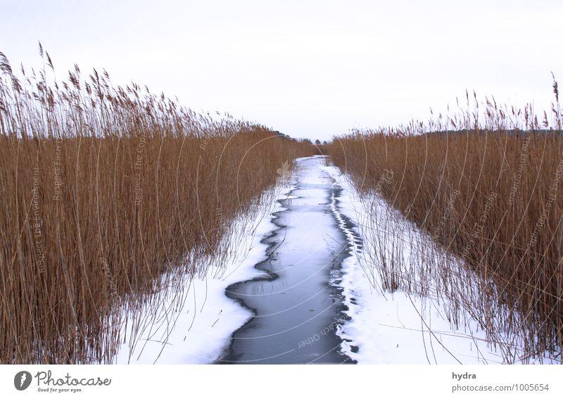 Winterdienst am Wasserweg Natur Ferien & Urlaub & Reisen blau Erholung Einsamkeit ruhig Ferne kalt Schnee Linie braun Eis Idylle Ausflug