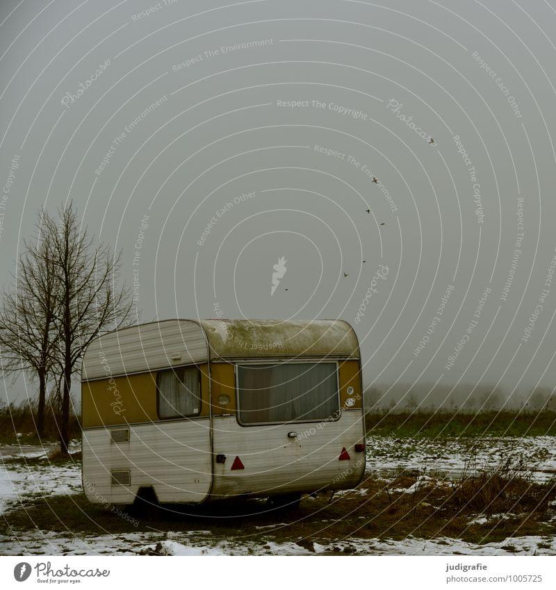 Winterferien Natur Ferien & Urlaub & Reisen Baum Einsamkeit Landschaft Winter dunkel kalt Umwelt Schnee Stimmung Feld Häusliches Leben trist Nebel Tourismus