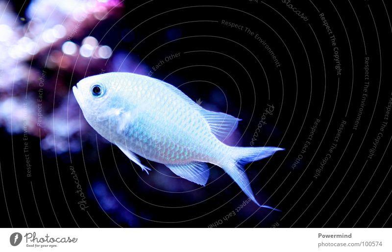 SchwimmendesFischstäbchen Meer Wasser Licht Sauberkeit Wasserpumpe fish Unterwasseraufnahme Beleuchtung meeresbewohner artenschutz exotisch Rotes Meer Scheune
