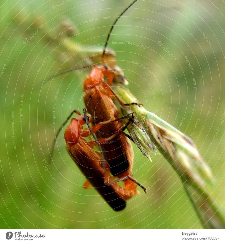 (alles) Liebe zum Geburtstag :) Tier Halm wackeln Detailaufnahme Käfer Freude