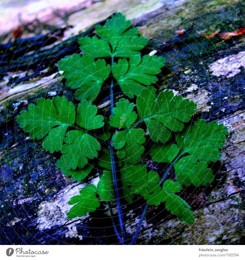 green leaf on dark ground Natur grün Pflanze Leben Wachstum Baumstamm Reifezeit