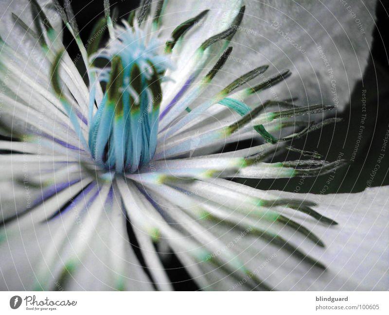 not as good as others schön Pflanze Sommer Freude Leben Blüte Garten Park glänzend Wassertropfen Romantik geheimnisvoll zart Blütenknospen sanft Märchen