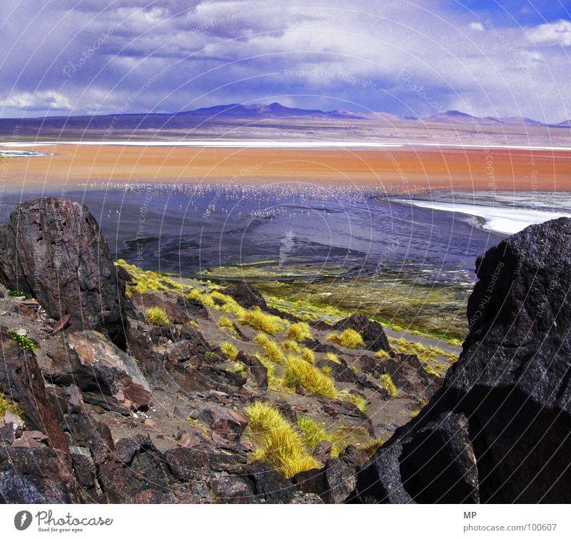Flamin Goland Flamingo Gras rot Bolivien Salar de Uyuni Tourismus außerirdisch Erscheinung Südamerika beeindruckend außergewöhnlich offen fantastisch Stein