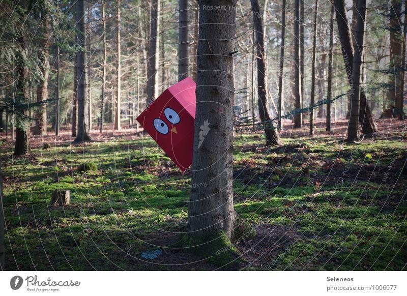 1200 l Kuckuck Ausflug Abenteuer Umwelt Natur Moos Wald Vogel beobachten Spielen frech Freude Glück Fröhlichkeit Lebensfreude achtsam Wachsamkeit Überraschung