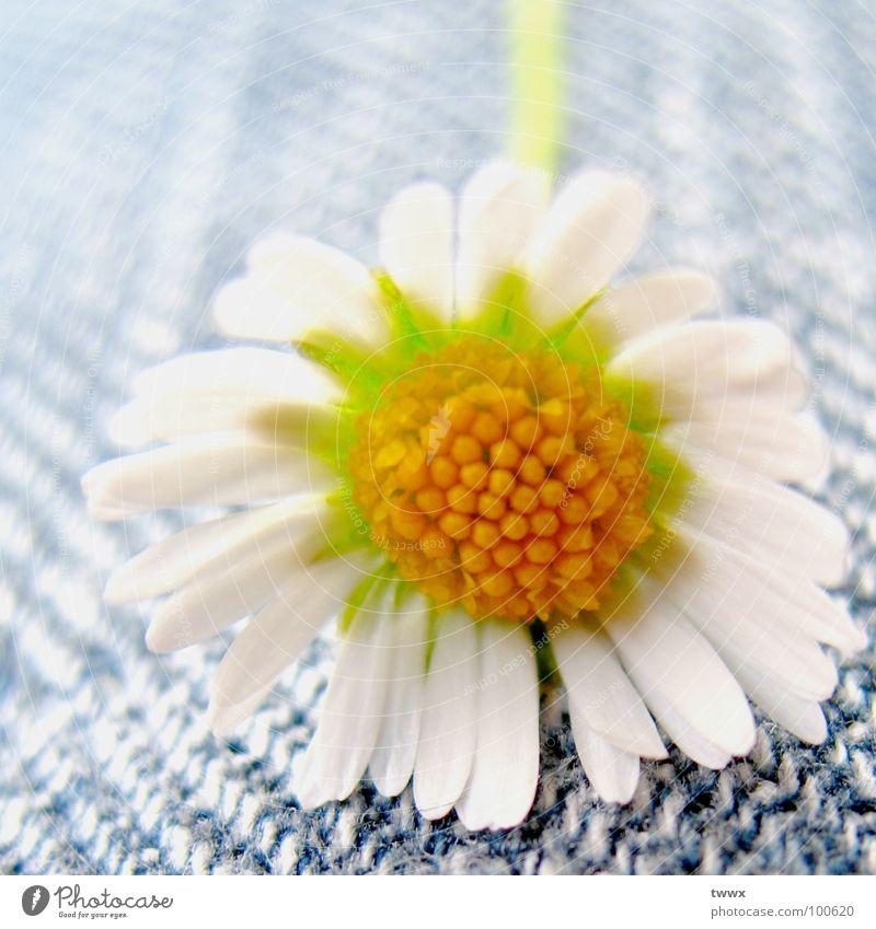 Flower Power Jeans (Remix '08) Blume Blüte Bekleidung Stoff Jeanshose Hose Jeansstoff Tiefenschärfe Gänseblümchen ökologisch Textilien Siebziger Jahre Chemie