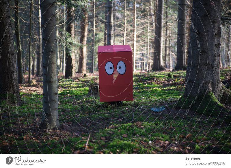 Kastenwesen Umwelt Natur Sonne Schönes Wetter Moos Wald Vogel beobachten Blick Fröhlichkeit Freude Lebensfreude Abenteuer bizarr Farbe Freizeit & Hobby Idylle
