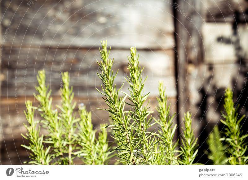 RosMari(n) Gesundheit Alternativmedizin Gesunde Ernährung Wellness harmonisch Sinnesorgane ruhig Duft Urelemente Sommer Schönes Wetter Pflanze Nutzpflanze