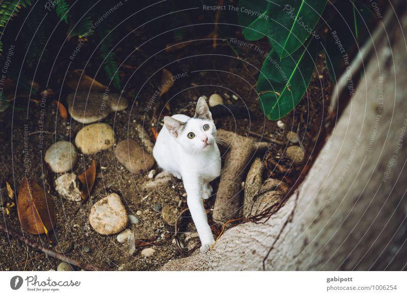 auf dem Sprung Katze Tier braun Stimmung springen frei sitzen Perspektive hoch beobachten bedrohlich niedlich Abenteuer Neugier entdecken Konzentration