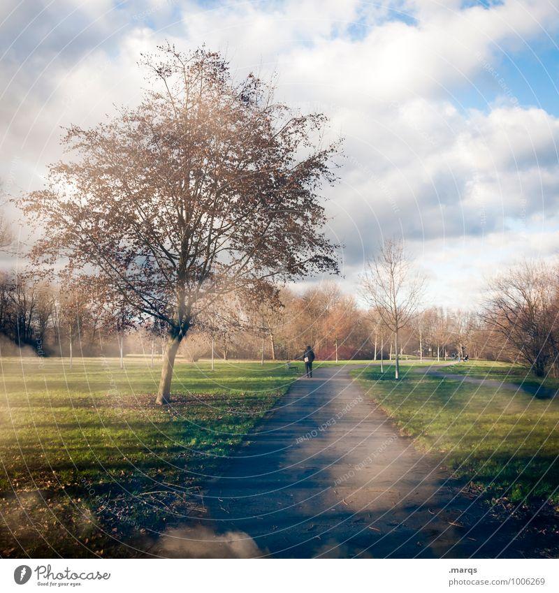 Früher Frühling Ausflug Mensch 1 Umwelt Natur Landschaft Urelemente Himmel Wolken Winter Klima Baum Park Wiese Wege & Pfade Erholung gehen schön Stimmung