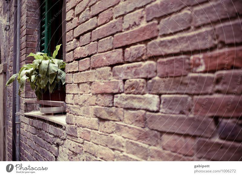 toskana | mauerblümchen Arezzo Altstadt Fassade braun grün rot Nostalgie Optimismus Perspektive Verfall Vergänglichkeit Wandel & Veränderung Mauer Backstein alt