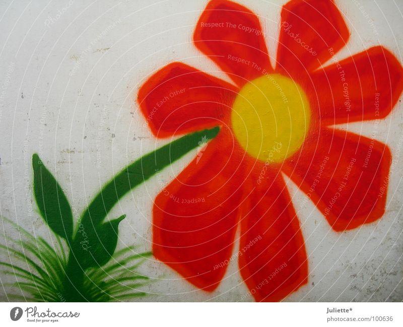 Hausblume alt Blume grün Farbe Wand orange Kunst neu Kultur
