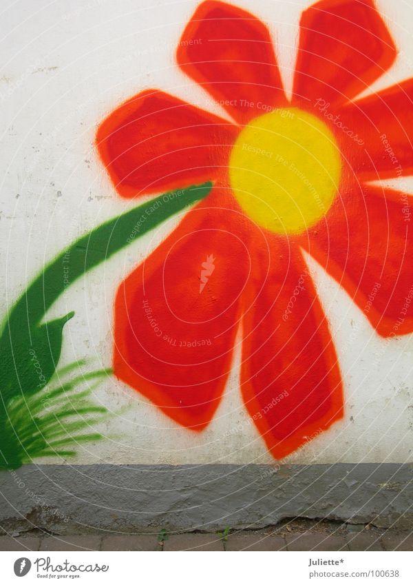 Hausblume II schön alt Blume grün gelb Farbe Wand orange neu