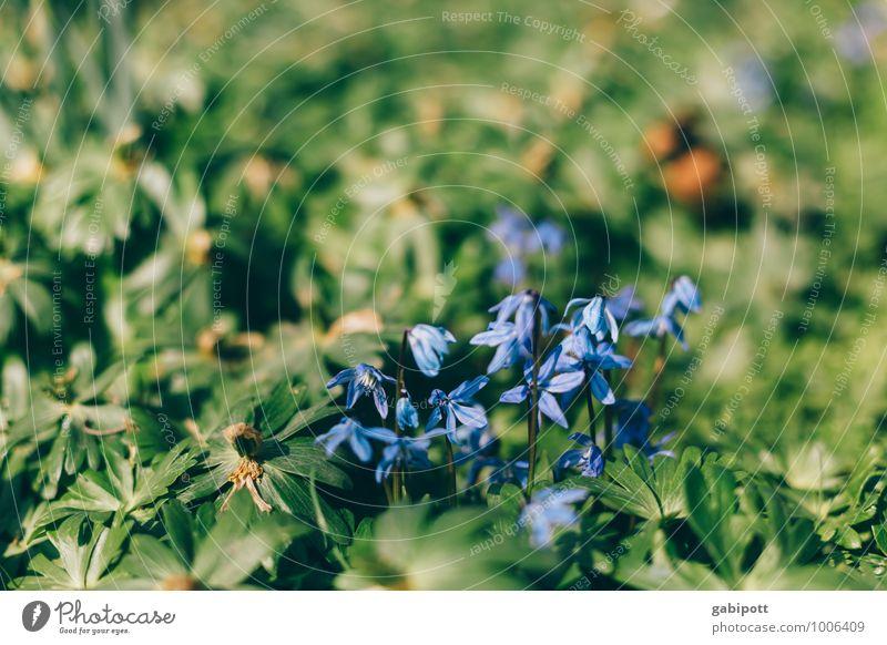 oh du frühliche Natur Pflanze grün Blume Umwelt Wärme Wiese Frühling Garten Park frisch Fröhlichkeit Freundlichkeit violett Vorfreude Frühlingsgefühle