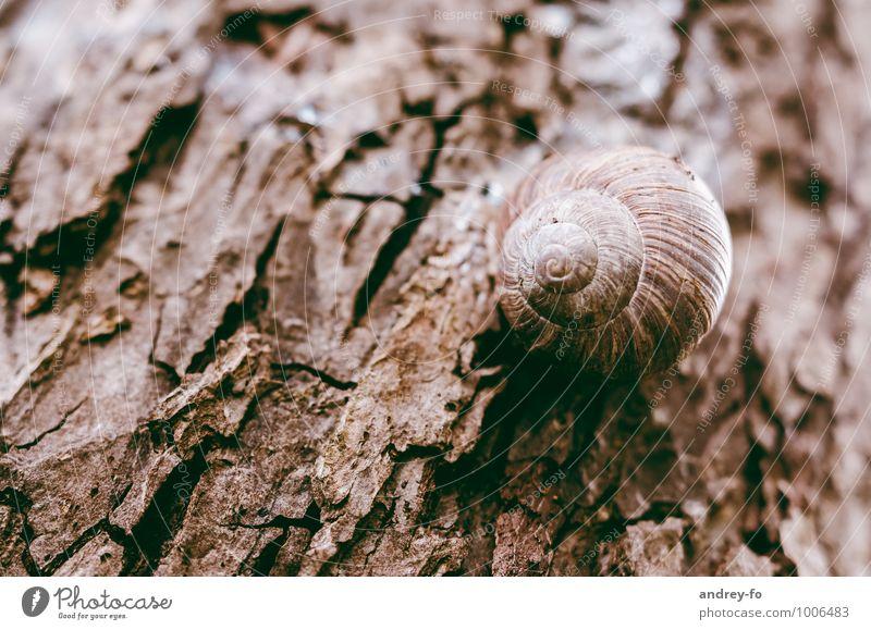 Schnecke Umwelt Natur Tier Sommer Pflanze Baum 1 alt schleimig wild braun Senior Einsamkeit Ziel Holz Baumrinde trocken schlafen Tod rund klebend Makroaufnahme