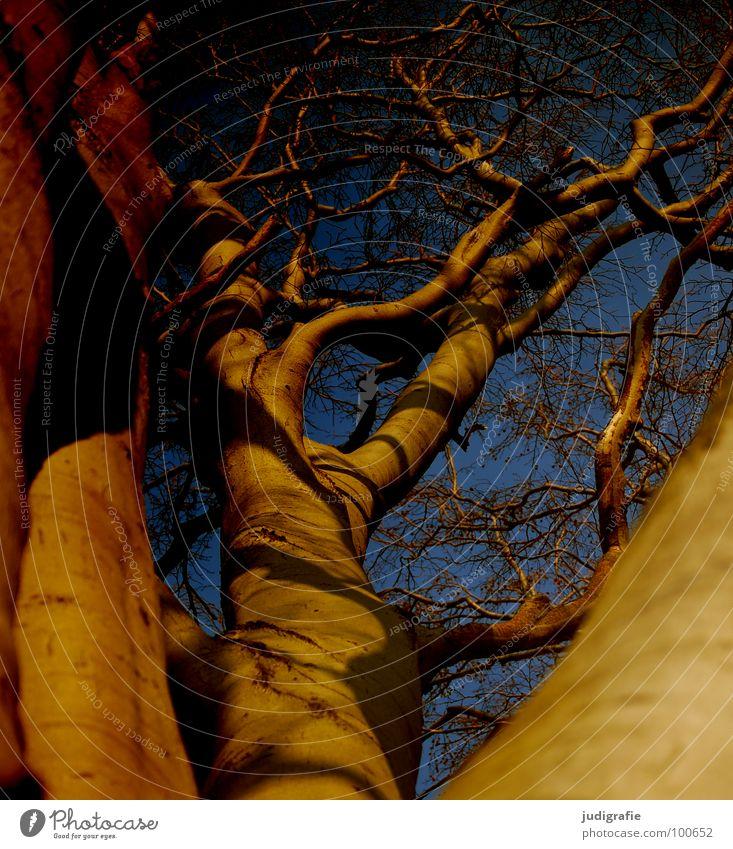 Buche Baum Geäst durcheinander Baumkrone Wald Umwelt Wachstum gedeihen Froschperspektive Macht erhaben Farbe Himmel Ast Zweig Schatten Natur aufwärts