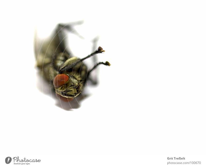 :-( nerven nervig Tod Fliege fliegen Makroaufnahme