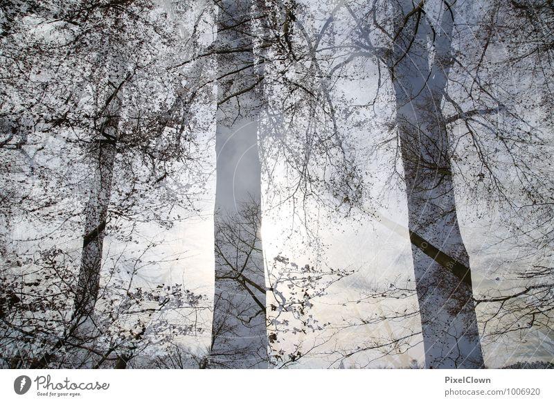 Wald Natur Ferien & Urlaub & Reisen Pflanze schön Baum Landschaft Tier Ferne schwarz Stil Holz Park träumen Zufriedenheit Tourismus