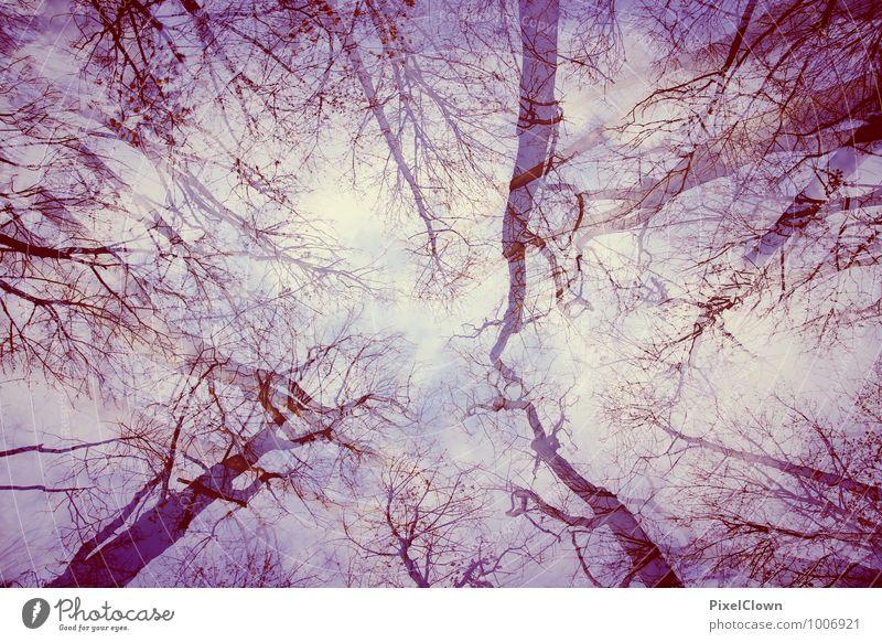 Blick gen Himmmel Himmel Natur Ferien & Urlaub & Reisen blau Pflanze Baum Einsamkeit Blatt Landschaft Tier Gefühle Blüte Stil Holz außergewöhnlich Stimmung