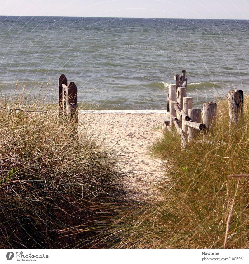 Zum Strand Natur Meer Strand ruhig Erholung Wege & Pfade Küste Ostsee