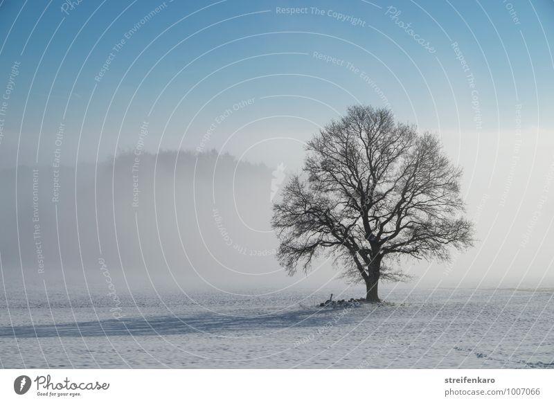 Einzelner Baum auf verschneitem Feld bei Bodennebel und Sonnenschein Winterurlaub wandern Landwirtschaft Forstwirtschaft Landschaft Pflanze Schönes Wetter Nebel