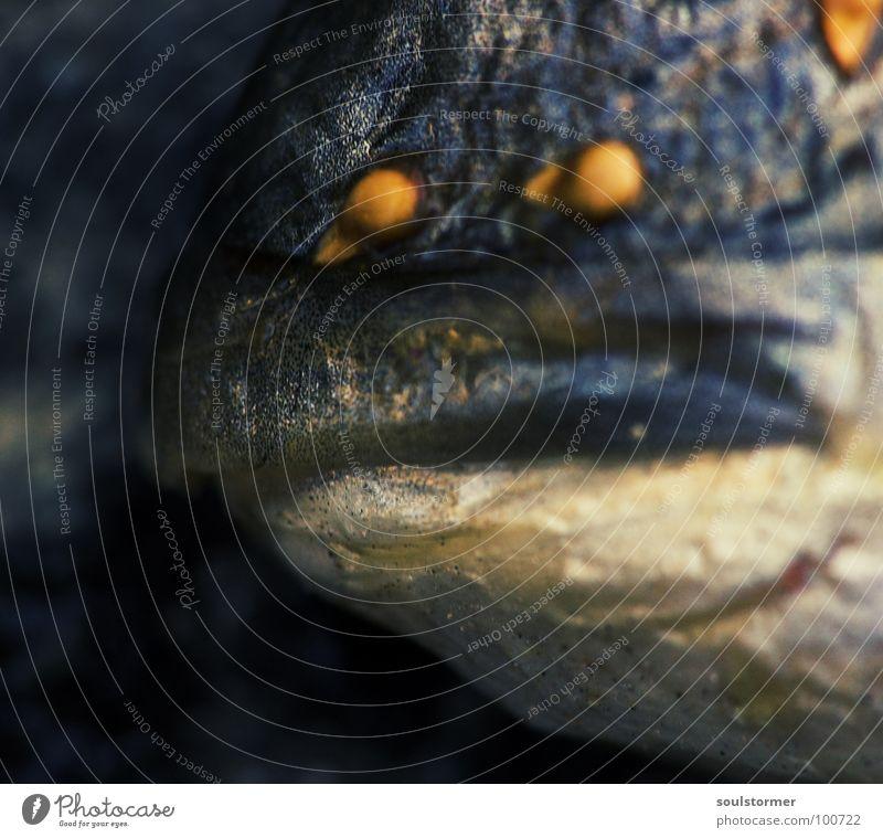 Fischfresse Wasser Sommer Tier Tod lustig Lebensmittel dreckig Mund Ernährung Vergänglichkeit atmen Fleisch Ekel Scheune Fischgräte