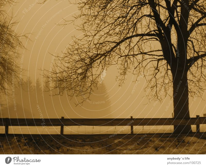 Zweisam Einsam Baum Einsamkeit ruhig Winter Wald kalt Schnee Denken Nebel Ast Trauer Baumstamm Zaun Verzweiflung Frustration
