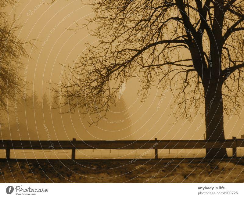 Zweisam Einsam Baum Winter Wald Zaun Nebel ruhig Denken Einsamkeit kalt Frustration Trauer Verzweiflung Schnee Ast Baumstamm
