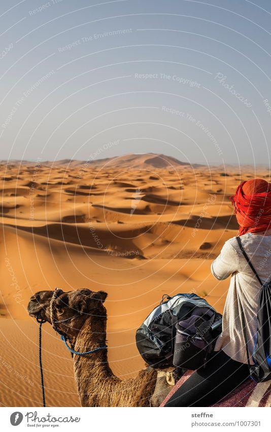 Wüste (7/10) Ferien & Urlaub & Reisen Wärme Sand Tourismus Abenteuer Düne Durst Naher und Mittlerer Osten Arabien Marokko Kamel Sahara Dromedar Tunesien