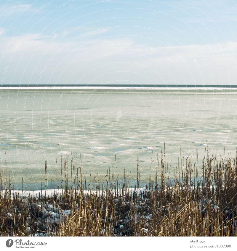 der Winter am Meer Ferien & Urlaub & Reisen Einsamkeit Landschaft ruhig Strand Ferne kalt Küste Schnee Freiheit Horizont Eis Sträucher Ausflug