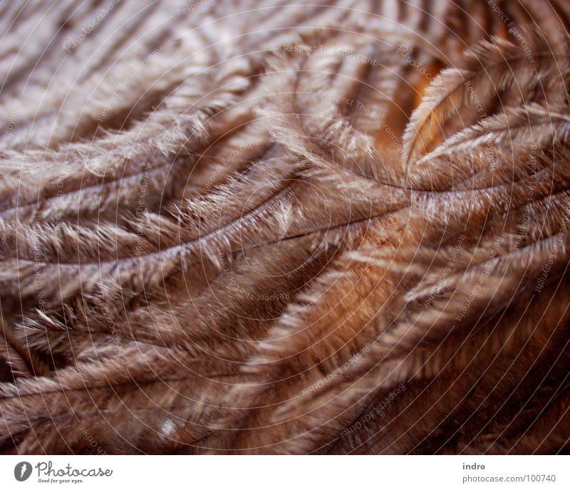 weich und warm Physik leicht Emu Feder Vogel Wärme Strukturen & Formen
