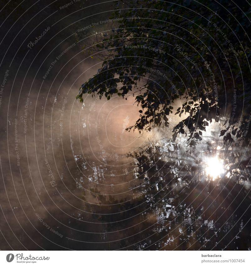Wenn der Tag die Nacht ablöst Umwelt Natur Urelemente Wasser Sonne Sonnenlicht Herbst Nebel Sträucher Teich See leuchten dunkel hell Stimmung Beginn Kraft