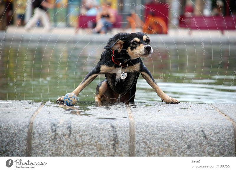 Wasserratte I Freude Tier kalt Hund klein nass Erfolg Ball Tropfen Ziel Schwimmen & Baden feucht Teich Säugetier