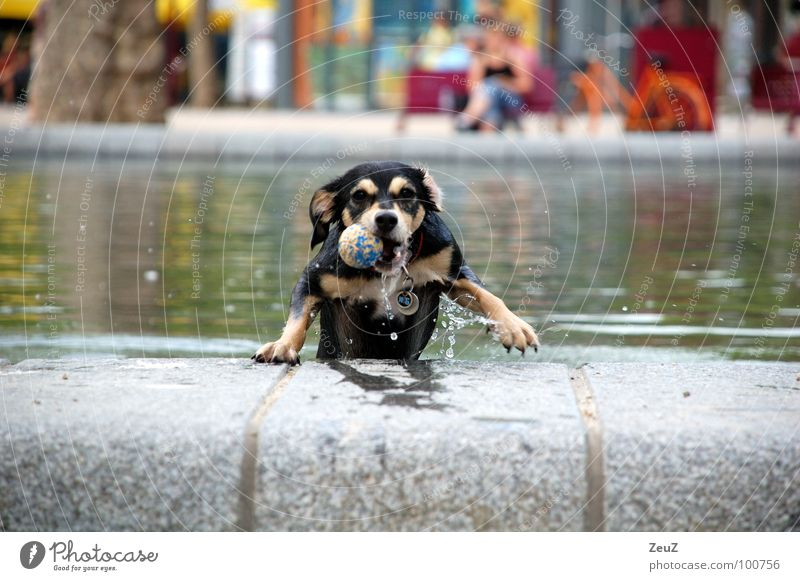 Wasserratte II Freude Tier kalt Hund klein nass Erfolg Ball Tropfen Ziel Schwimmen & Baden feucht Teich Säugetier