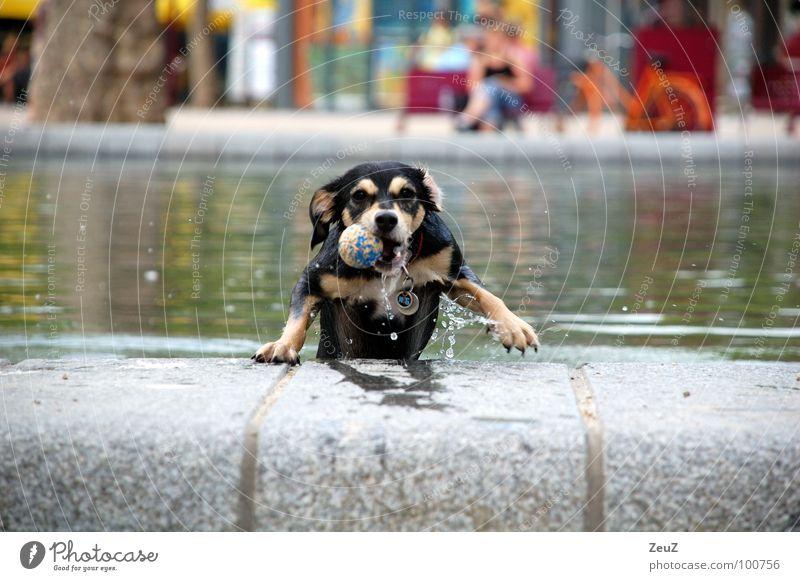 Wasserratte II Wasser Freude Tier kalt Hund klein nass Erfolg Ball Tropfen Ziel Schwimmen & Baden feucht Teich Säugetier