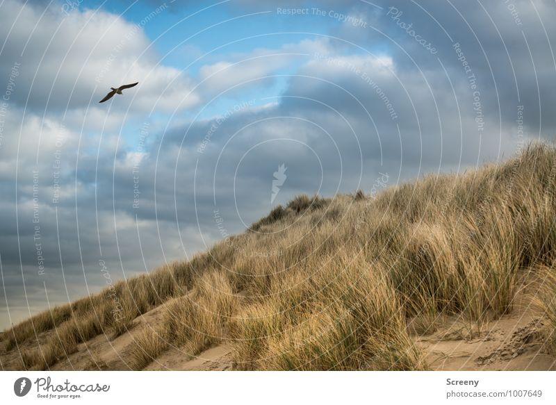 Feel free Himmel Natur Ferien & Urlaub & Reisen blau Pflanze grün weiß Erholung Meer Einsamkeit Landschaft ruhig Wolken Tier Strand Winter