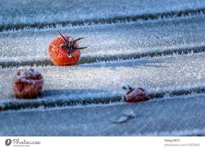 Tomaten im Winter Pflanze kalt Lebensmittel Eis Vergänglichkeit Frost Gemüse Nutzpflanze