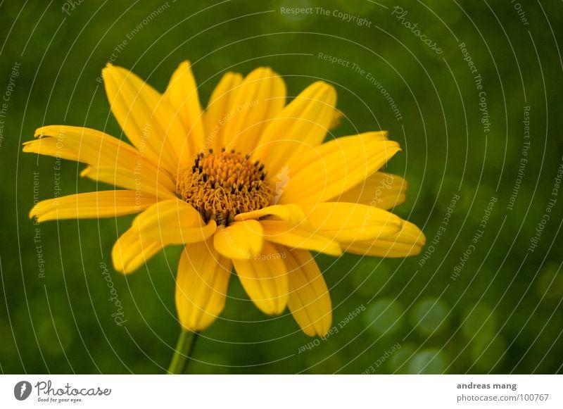 Gelb Blume gelb grün nah Wiese Gras schön Makroaufnahme flower near Rasen beautiful