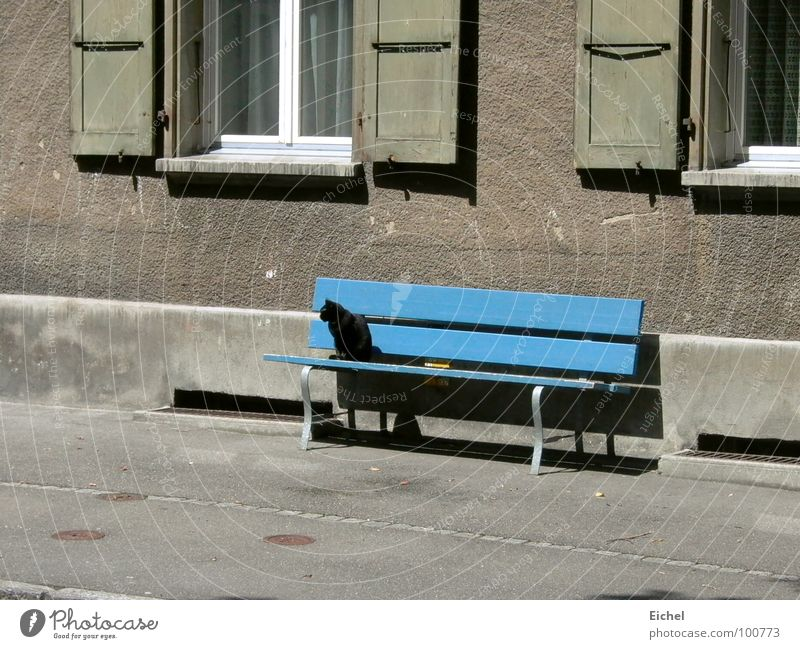 Katzenbank blau Wand sitzen Bank Bürgersteig Säugetier Fensterladen