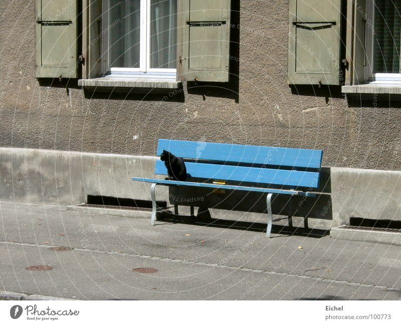 Katzenbank Wand Fensterladen Bürgersteig Säugetier Bank blau Schwarze Katze sitzen